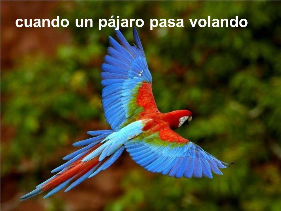 cuando un pájaro pasa volando