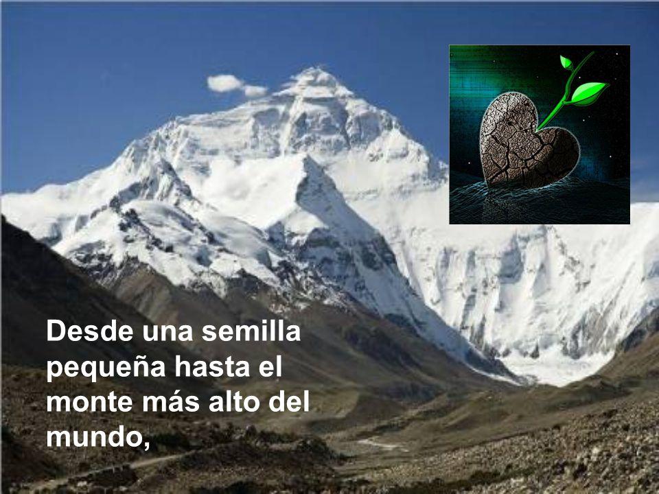 Desde una semilla pequeña hasta el monte más alto del mundo,
