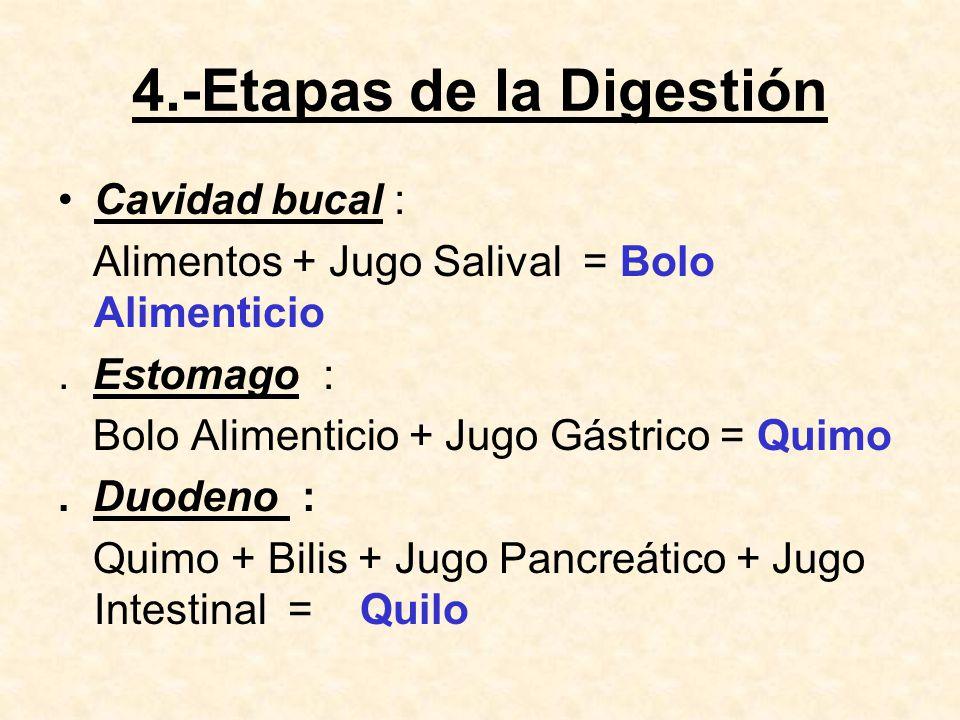 4.-Etapas de la Digestión