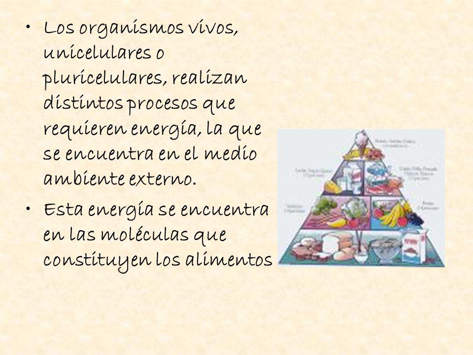 Los organismos vivos, unicelulares o pluricelulares, realizan distintos procesos que requieren energía, la que se encuentra en el medio ambiente externo.