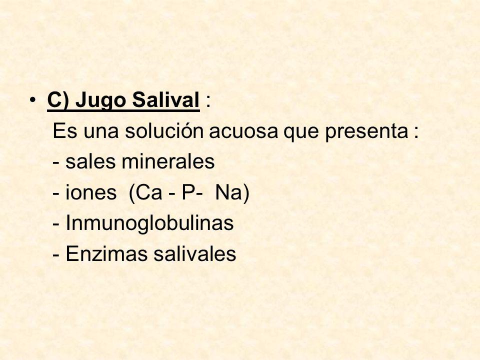 C) Jugo Salival : Es una solución acuosa que presenta : - sales minerales. - iones (Ca - P- Na)