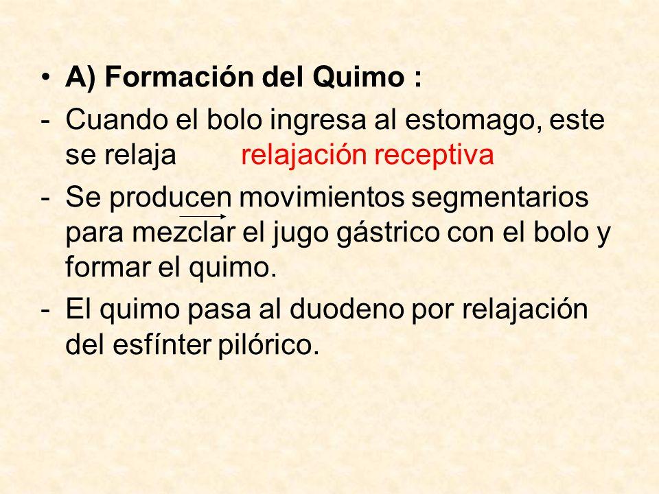 A) Formación del Quimo :