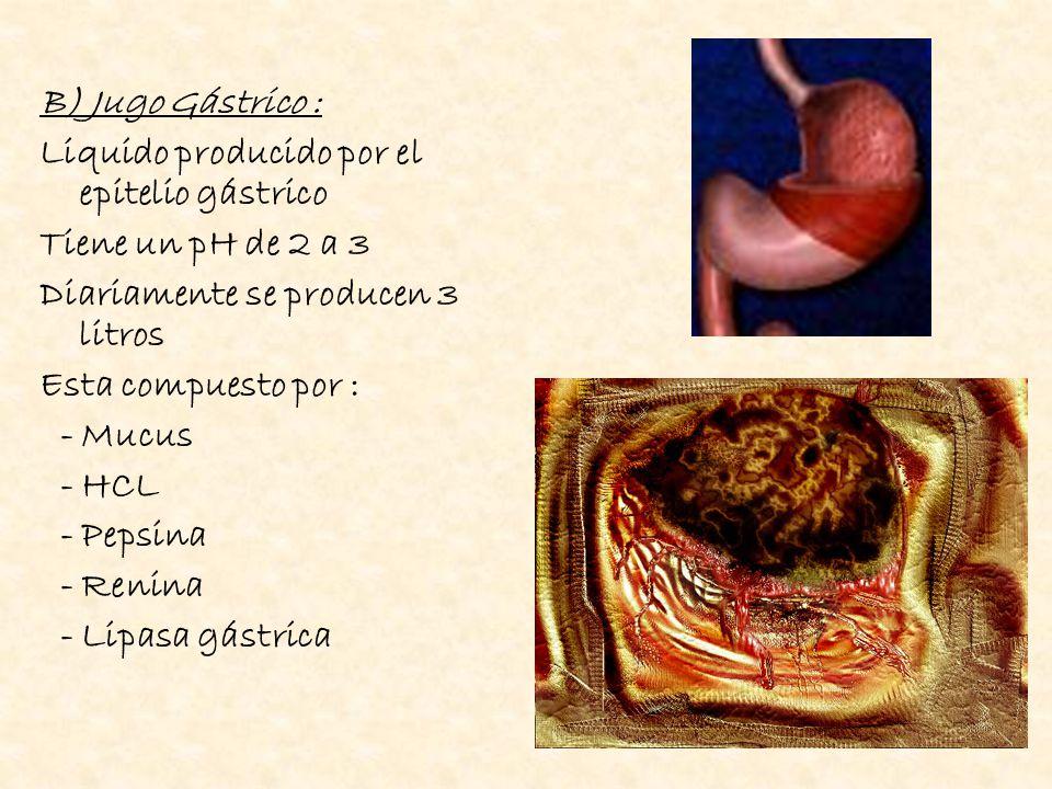 B) Jugo Gástrico : Liquido producido por el epitelio gástrico. Tiene un pH de 2 a 3. Diariamente se producen 3 litros.