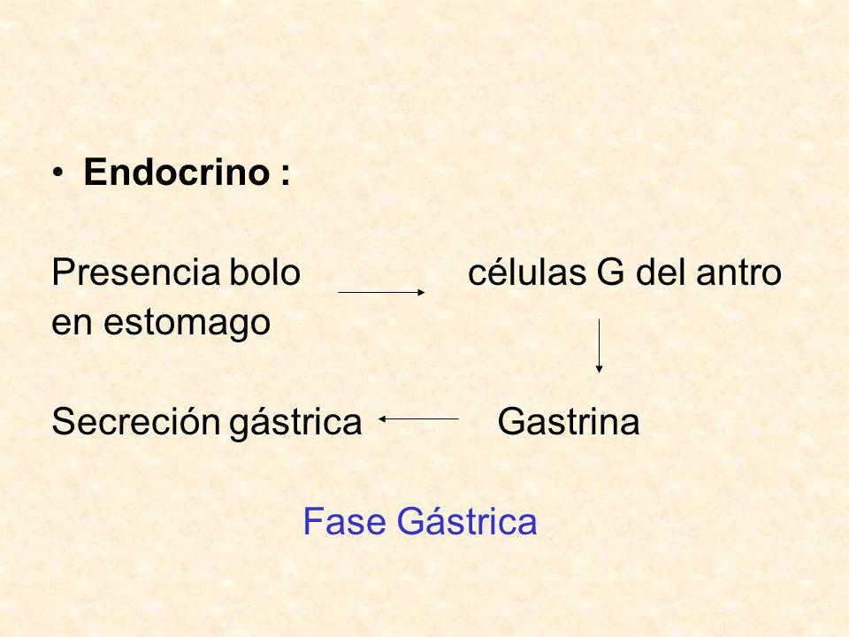Endocrino : Presencia bolo células G del antro. en estomago. Secreción gástrica Gastrina.