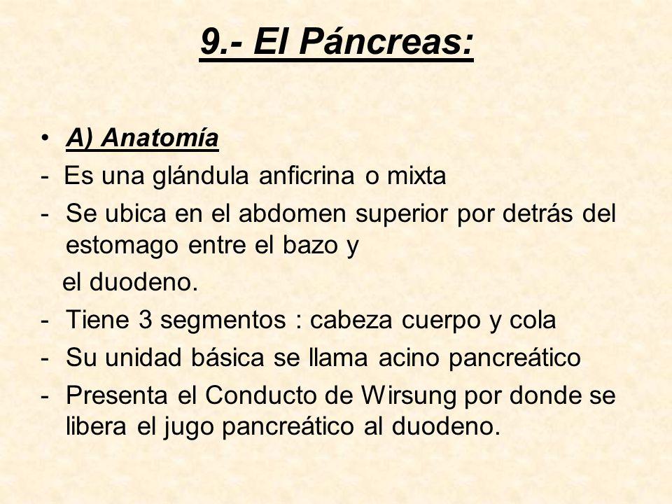 9.- El Páncreas: A) Anatomía - Es una glándula anficrina o mixta