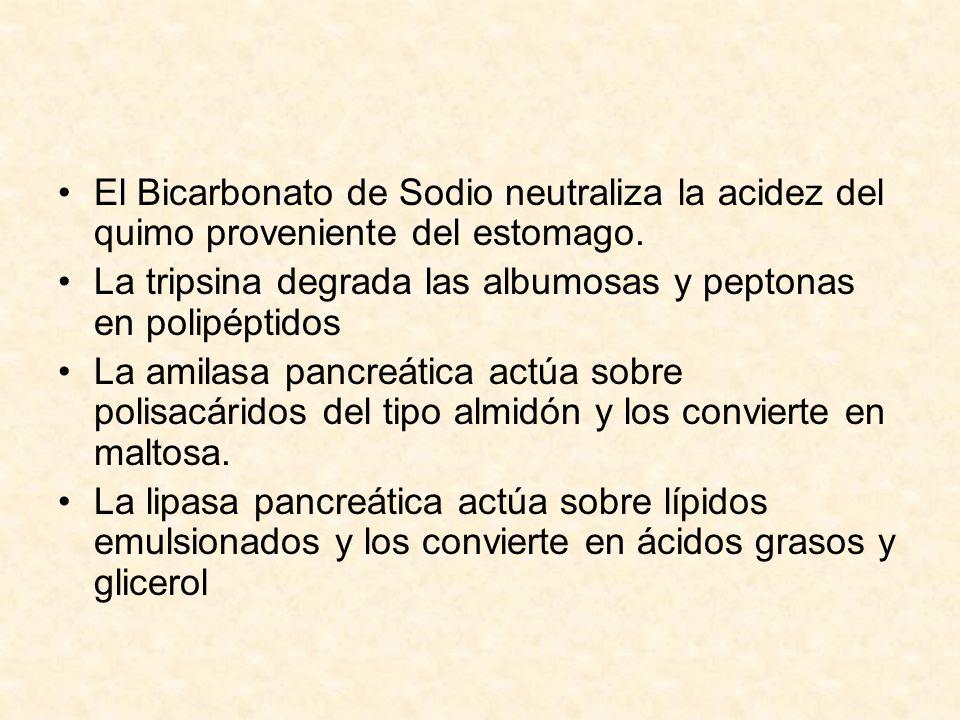 El Bicarbonato de Sodio neutraliza la acidez del quimo proveniente del estomago.