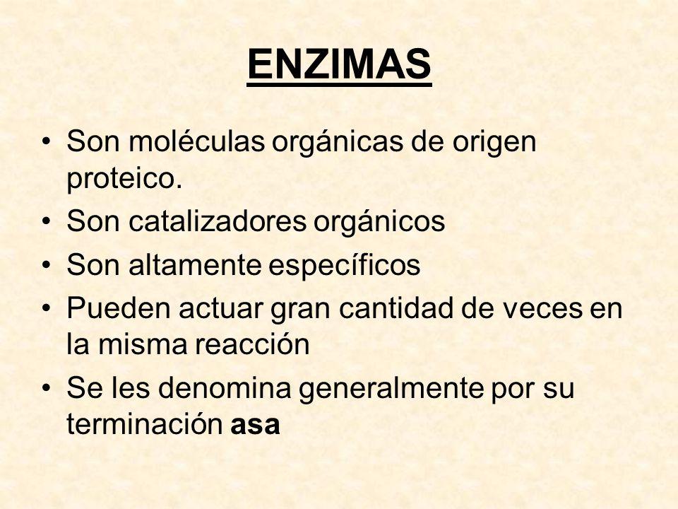 ENZIMAS Son moléculas orgánicas de origen proteico.