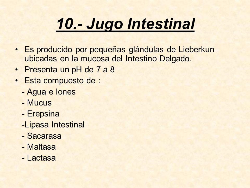 10.- Jugo Intestinal Es producido por pequeñas glándulas de Lieberkun ubicadas en la mucosa del Intestino Delgado.