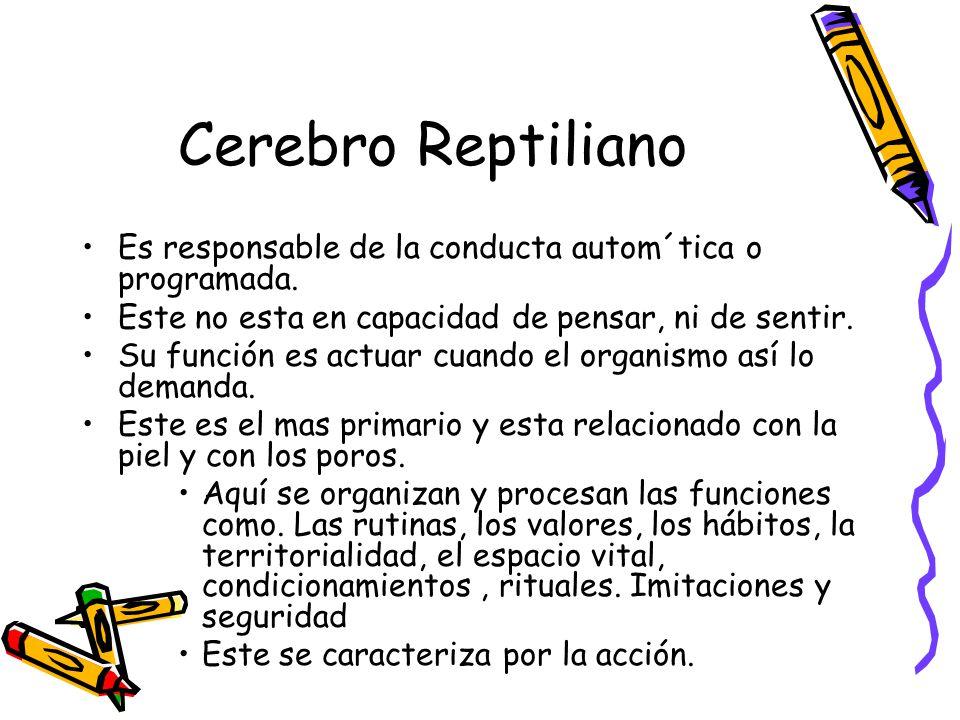 Cerebro Reptiliano Es responsable de la conducta autom´tica o programada. Este no esta en capacidad de pensar, ni de sentir.