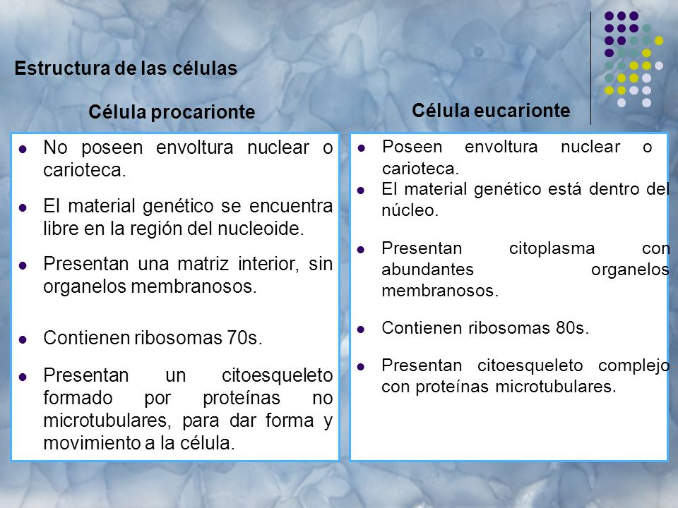 Estructura de las células