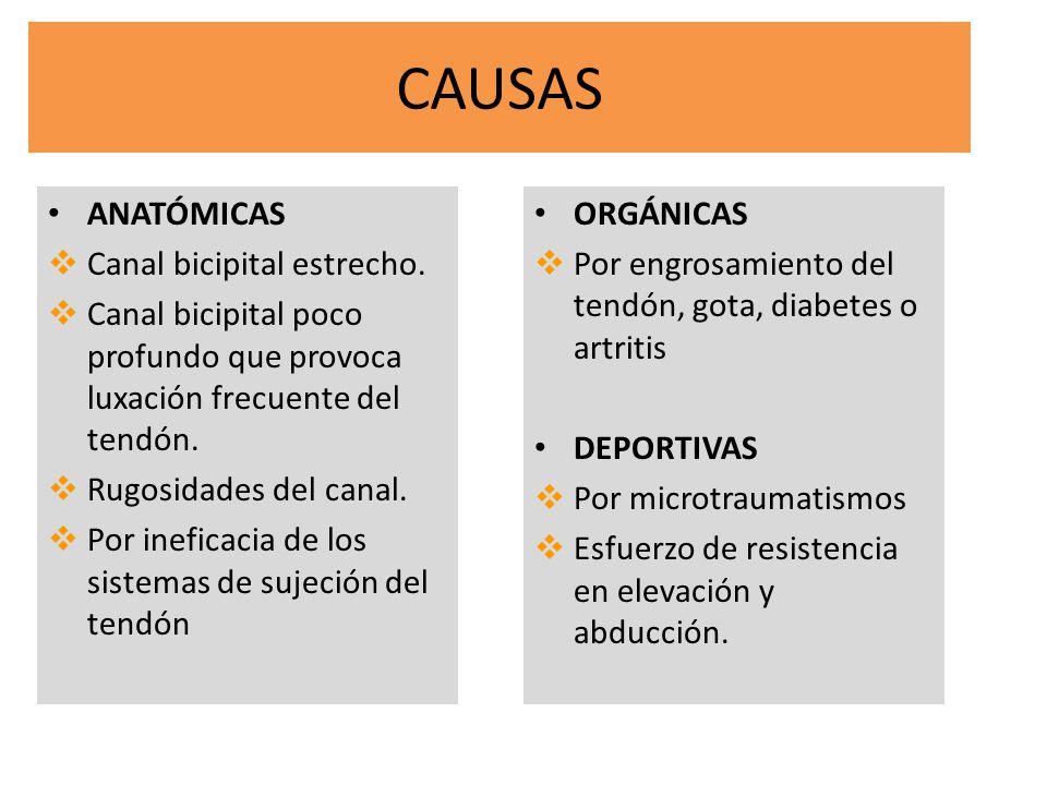 CAUSAS ANATÓMICAS Canal bicipital estrecho.