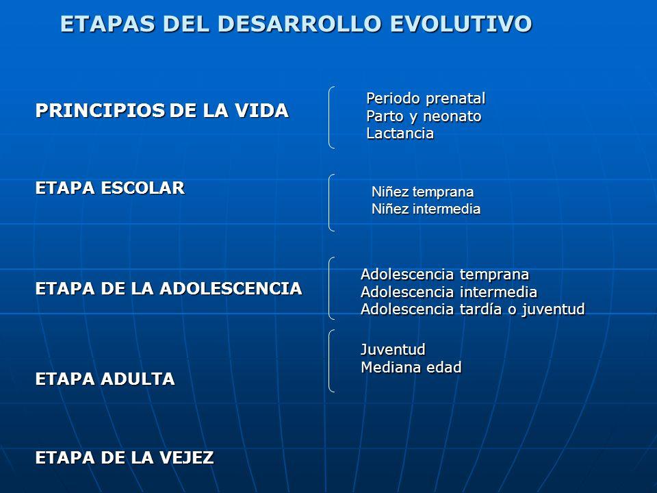 ETAPAS DEL DESARROLLO EVOLUTIVO