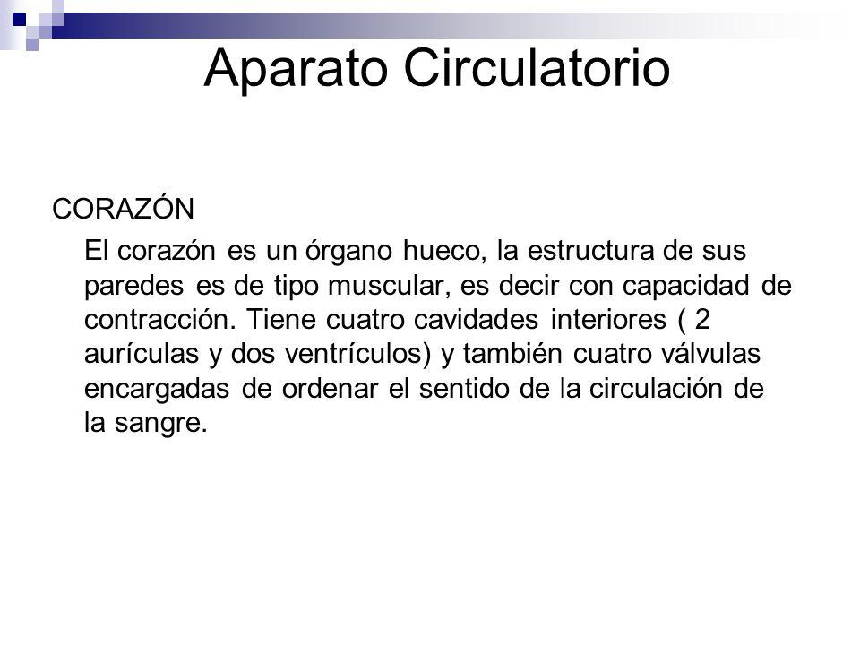 Aparato Circulatorio CORAZÓN