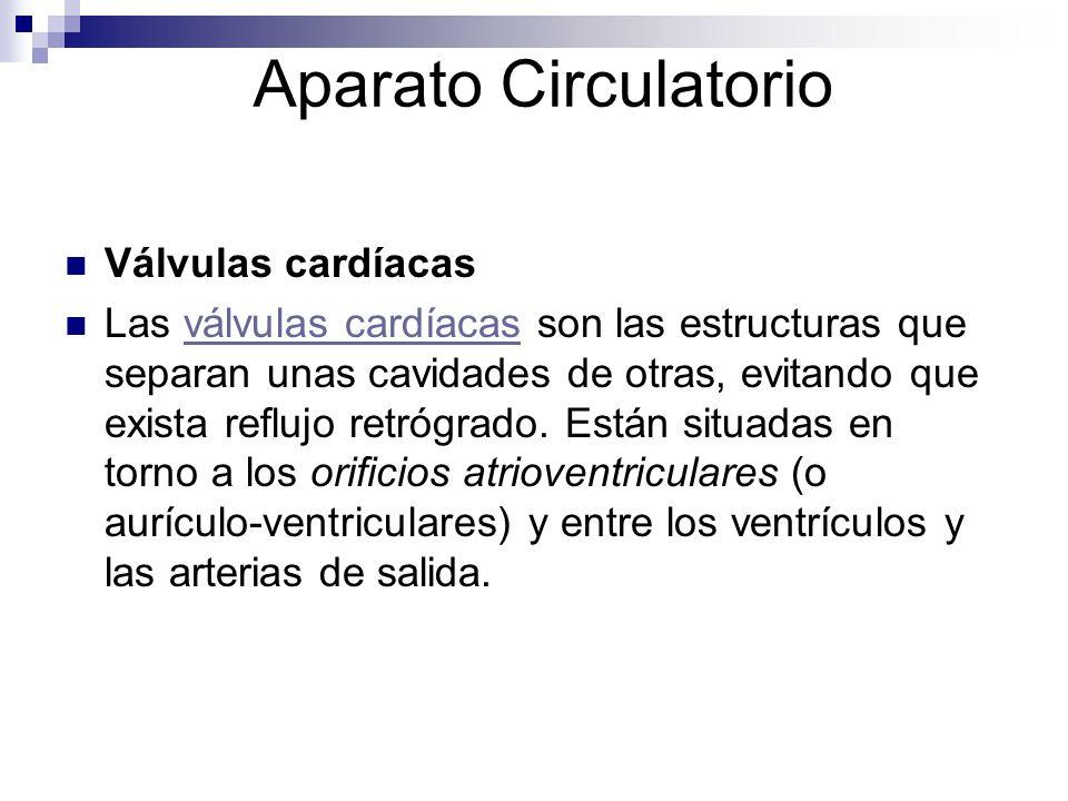Aparato Circulatorio Válvulas cardíacas