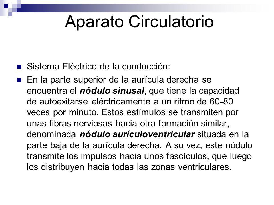Aparato Circulatorio Sistema Eléctrico de la conducción: