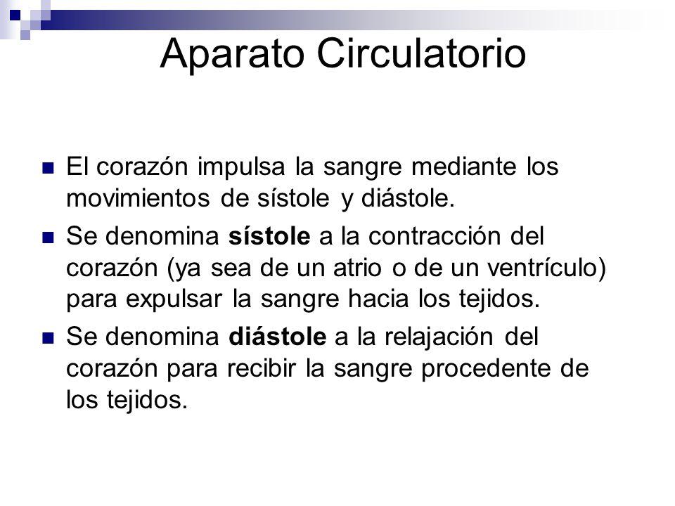 Aparato Circulatorio El corazón impulsa la sangre mediante los movimientos de sístole y diástole.