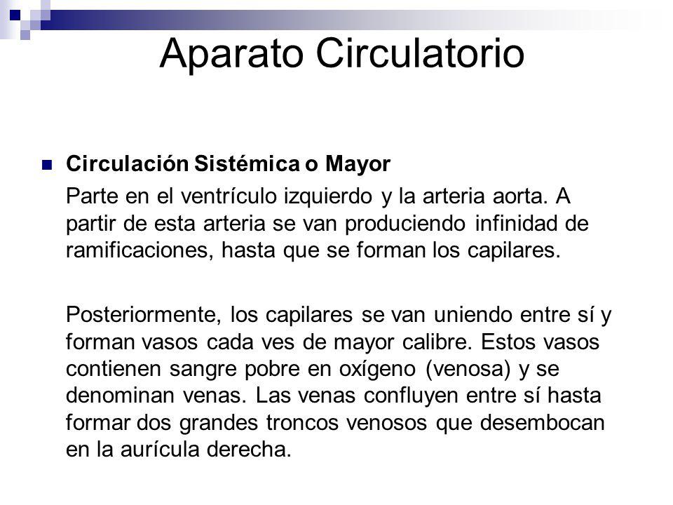 Aparato Circulatorio Circulación Sistémica o Mayor