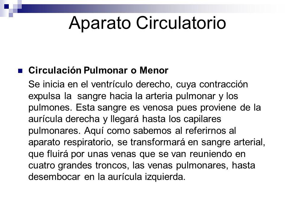 Aparato Circulatorio Circulación Pulmonar o Menor