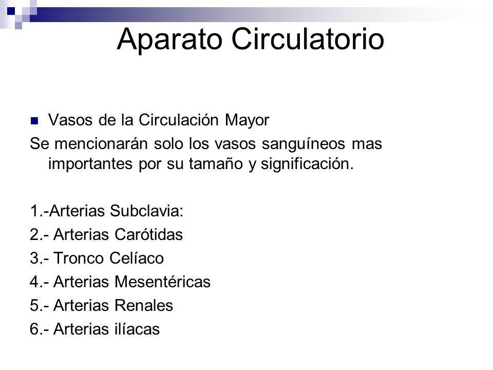 Aparato Circulatorio Vasos de la Circulación Mayor