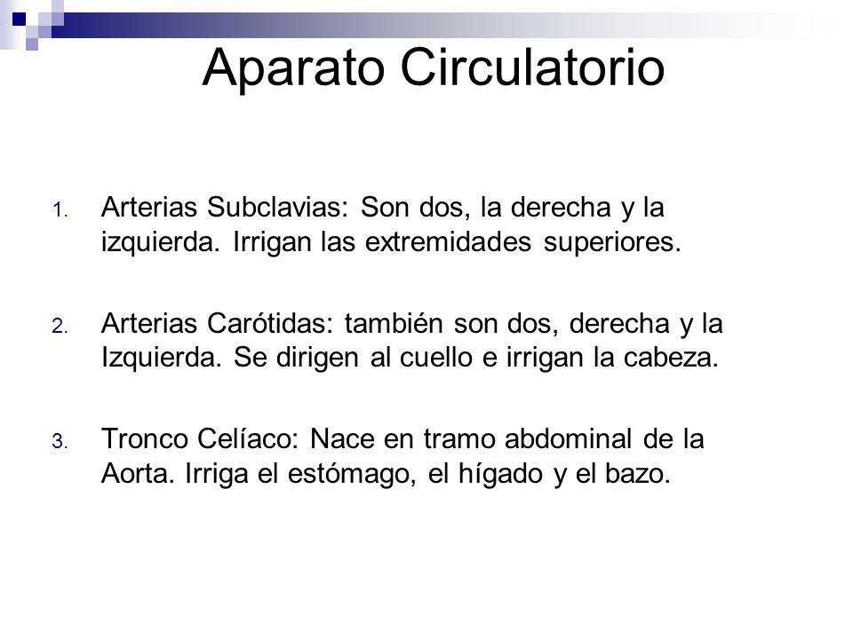 Aparato Circulatorio Arterias Subclavias: Son dos, la derecha y la izquierda. Irrigan las extremidades superiores.