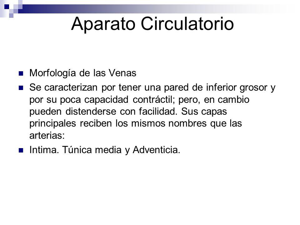 Aparato Circulatorio Morfología de las Venas