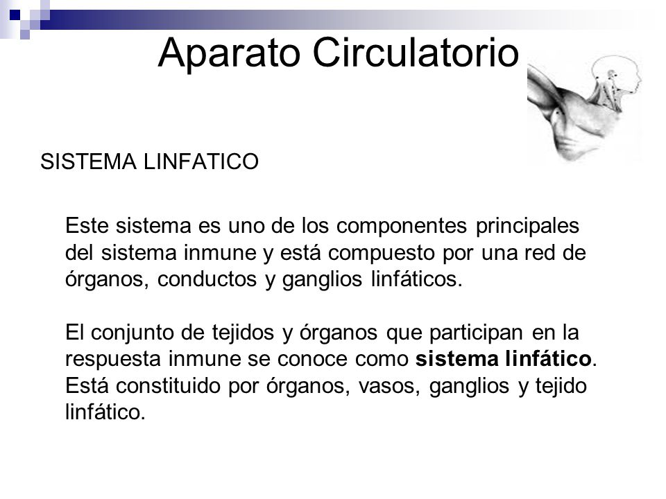 Aparato Circulatorio SISTEMA LINFATICO