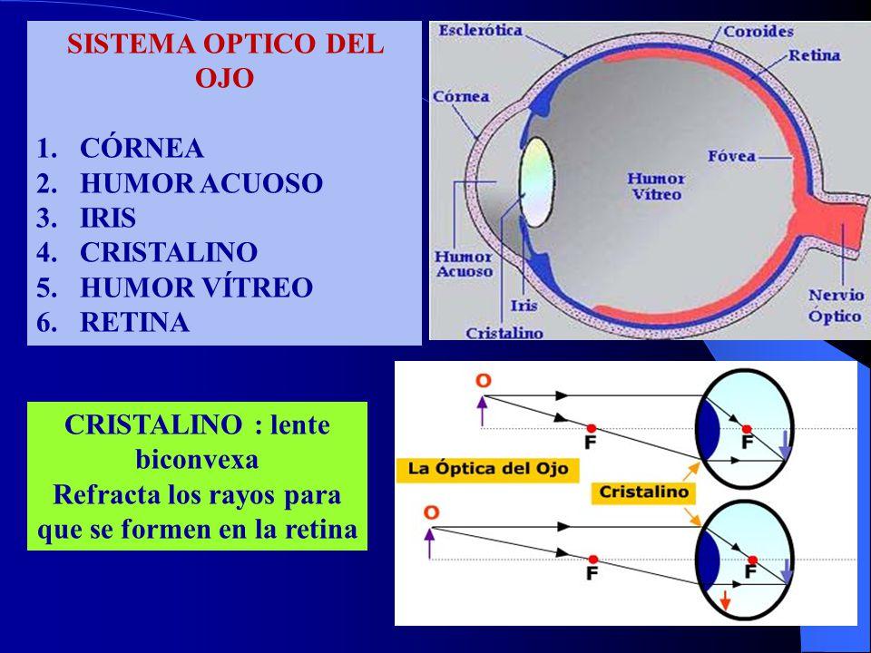 CRISTALINO : lente biconvexa