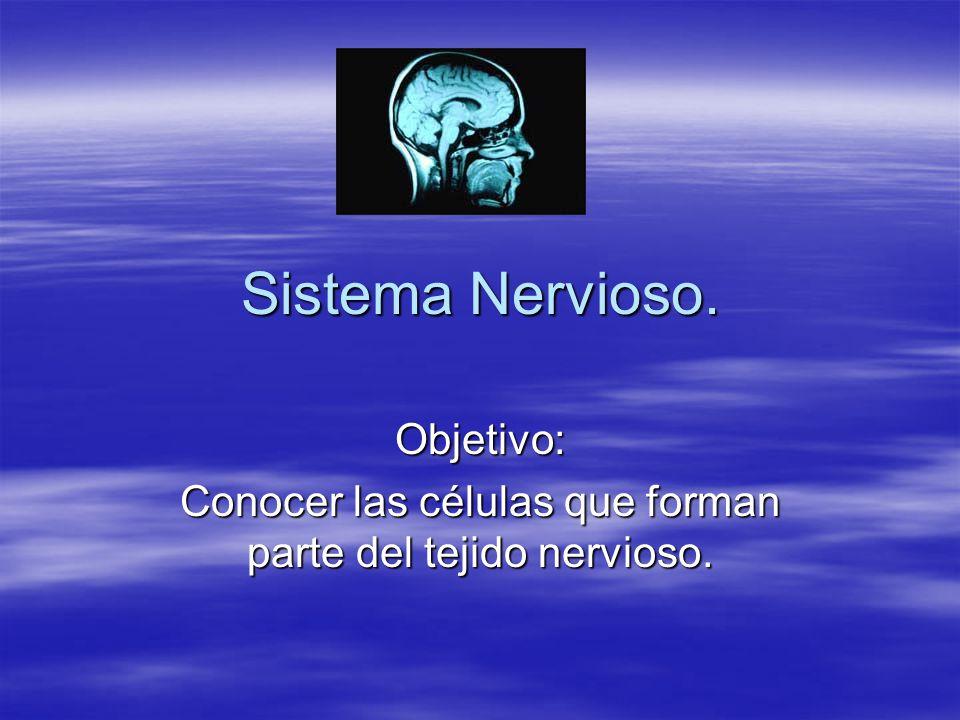 Objetivo: Conocer las células que forman parte del tejido nervioso.
