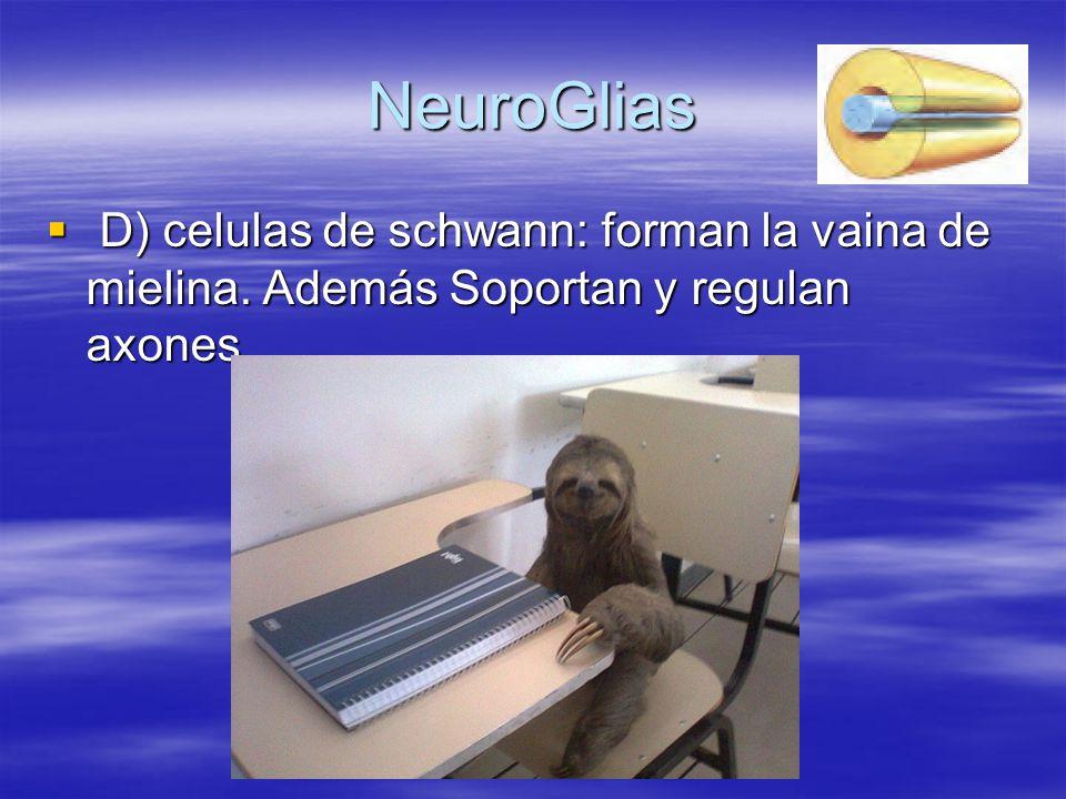 NeuroGlias D) celulas de schwann: forman la vaina de mielina. Además Soportan y regulan axones.