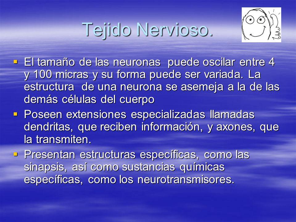 Tejido Nervioso.
