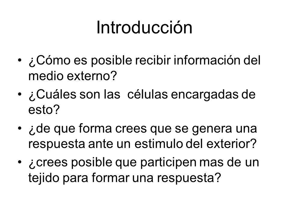 Introducción ¿Cómo es posible recibir información del medio externo