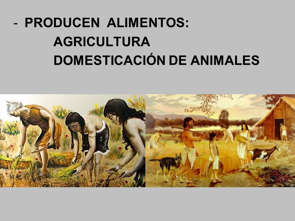 PRODUCEN ALIMENTOS: AGRICULTURA DOMESTICACIÓN DE ANIMALES