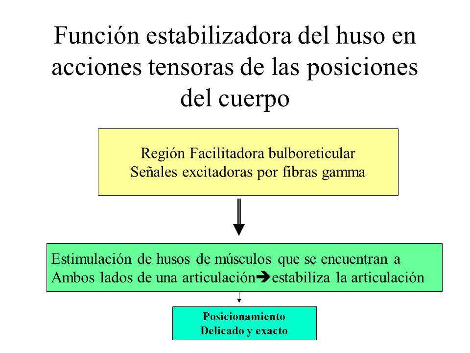 Función estabilizadora del huso en acciones tensoras de las posiciones del cuerpo