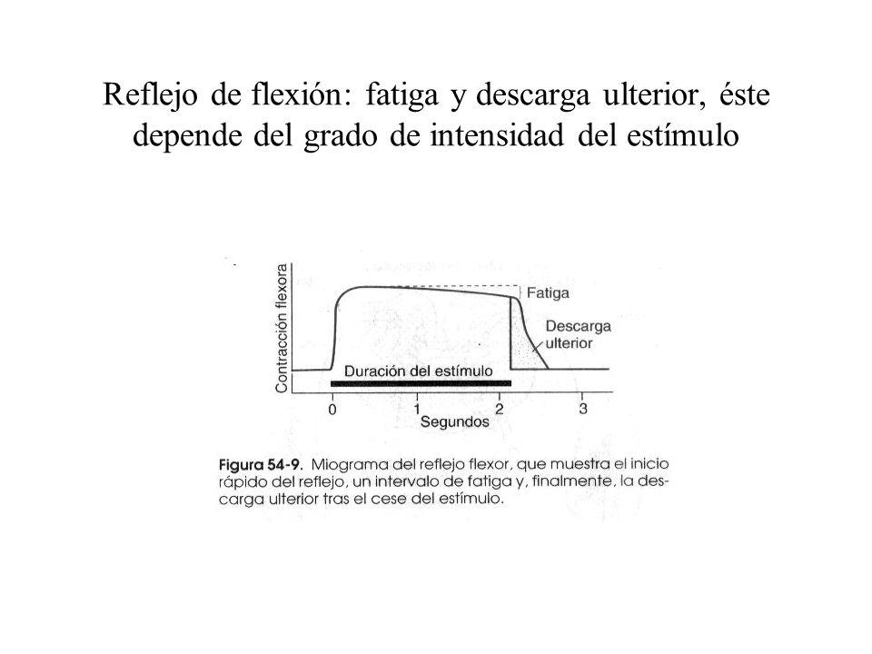 Reflejo de flexión: fatiga y descarga ulterior, éste depende del grado de intensidad del estímulo