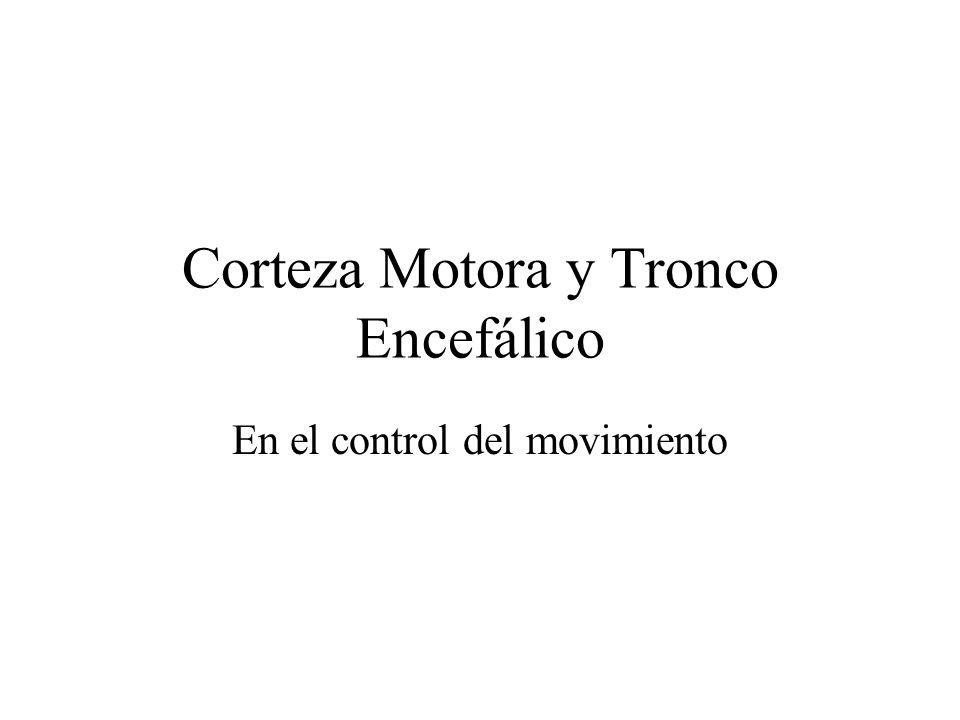 Corteza Motora y Tronco Encefálico