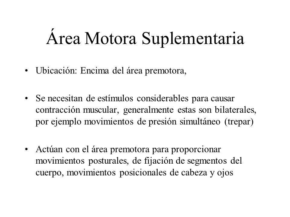 Área Motora Suplementaria