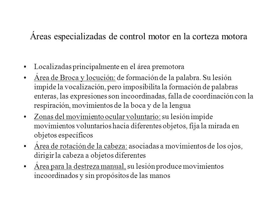 Áreas especializadas de control motor en la corteza motora