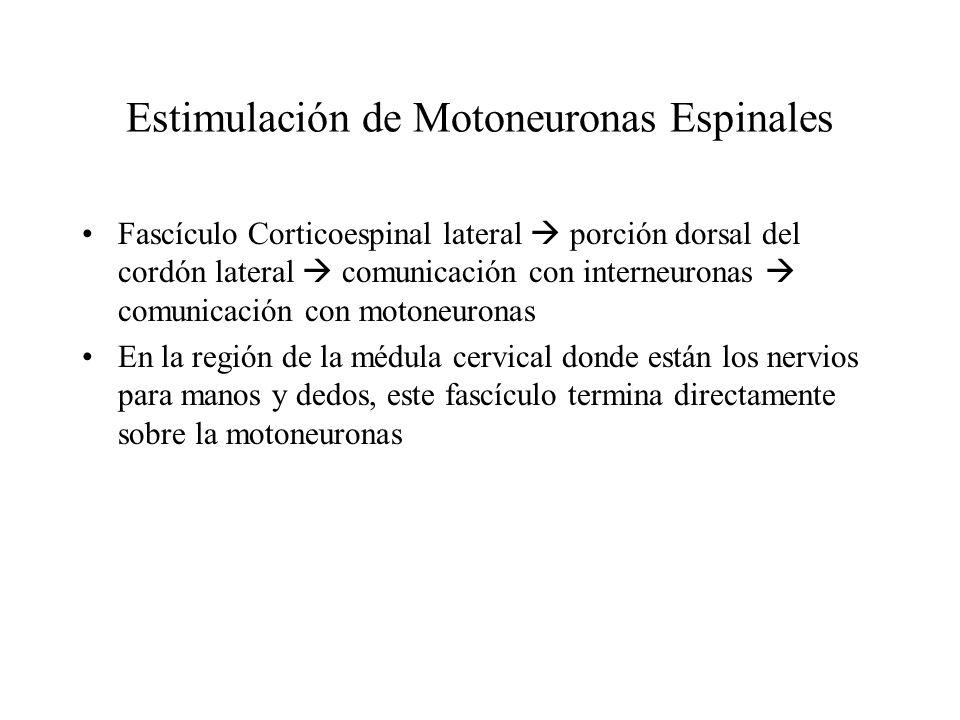 Estimulación de Motoneuronas Espinales