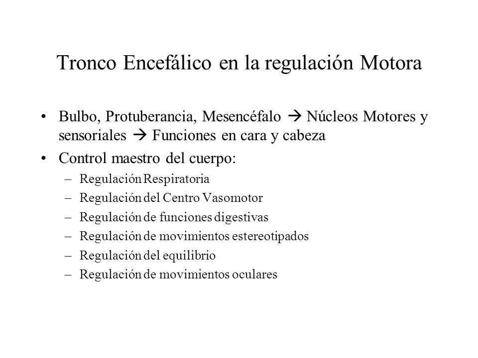 Tronco Encefálico en la regulación Motora