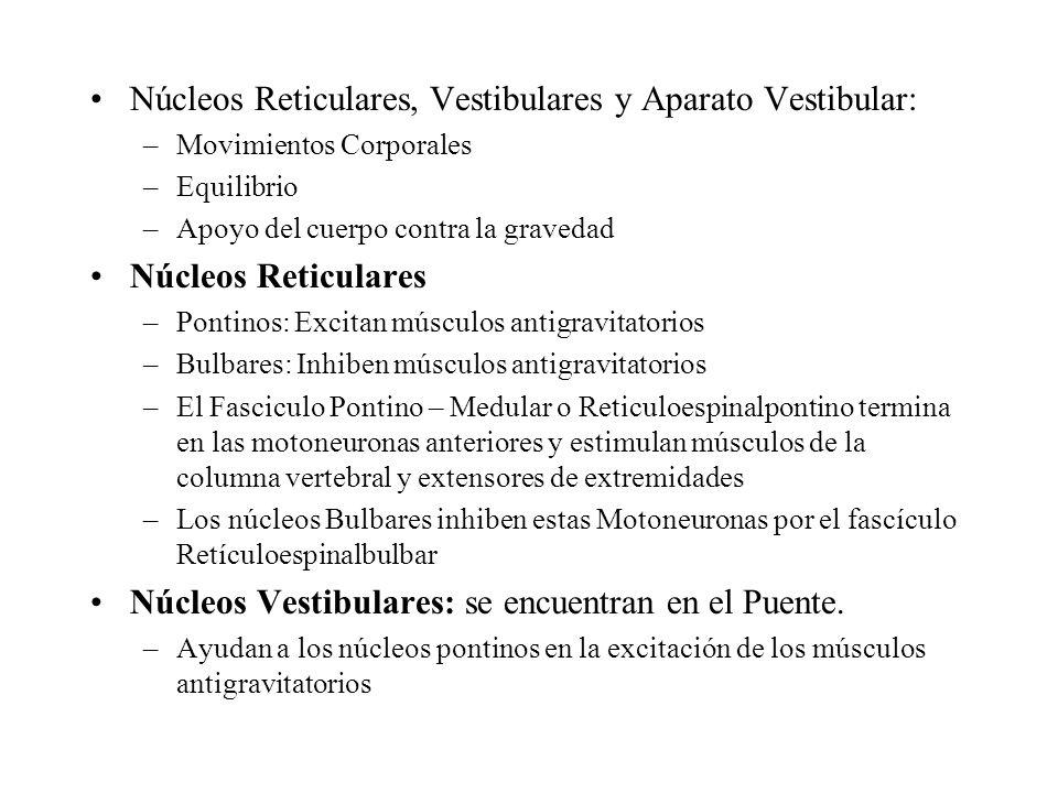 Núcleos Reticulares, Vestibulares y Aparato Vestibular: