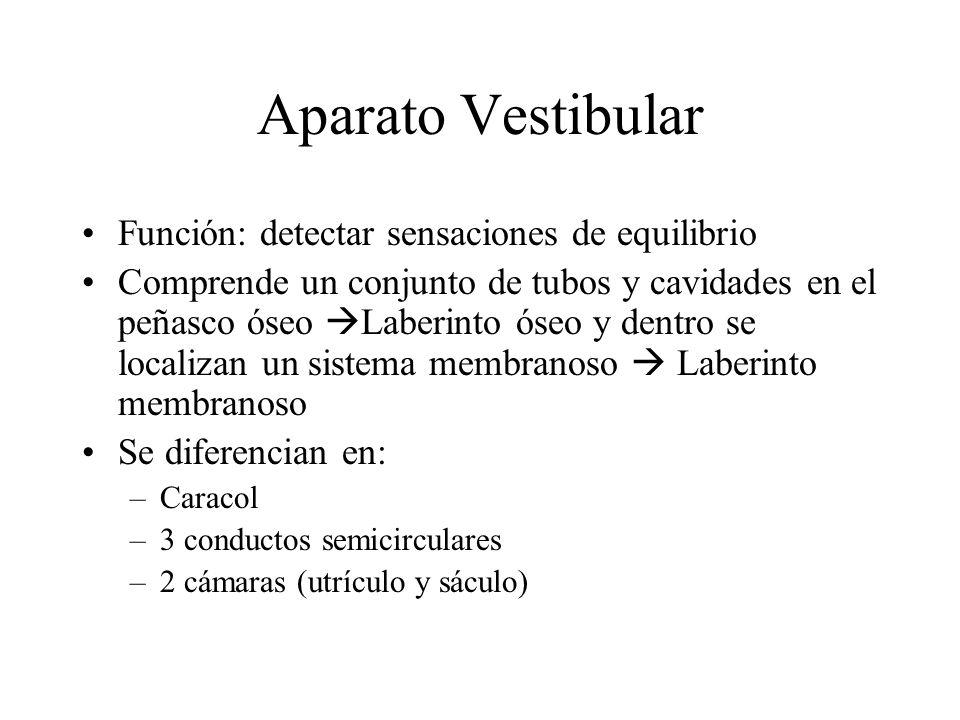 Aparato Vestibular Función: detectar sensaciones de equilibrio