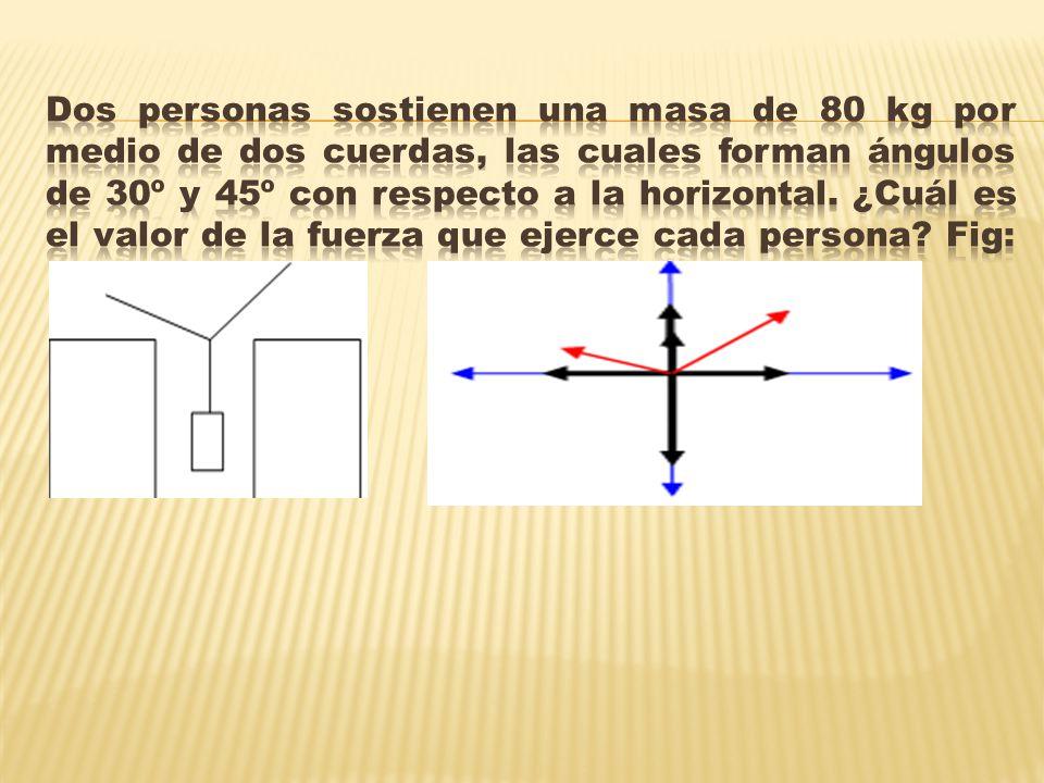 Dos personas sostienen una masa de 80 kg por medio de dos cuerdas, las cuales forman ángulos de 30º y 45º con respecto a la horizontal.