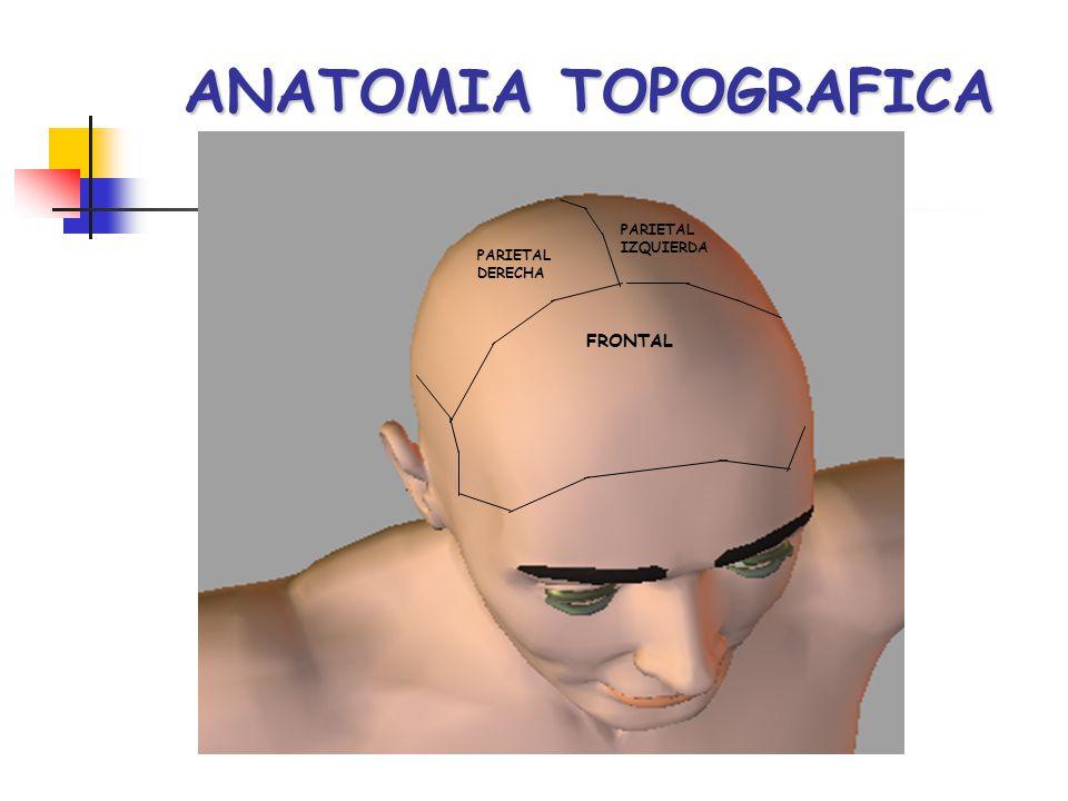 ANATOMIA TOPOGRAFICA PARIETAL IZQUIERDA PARIETAL DERECHA FRONTAL