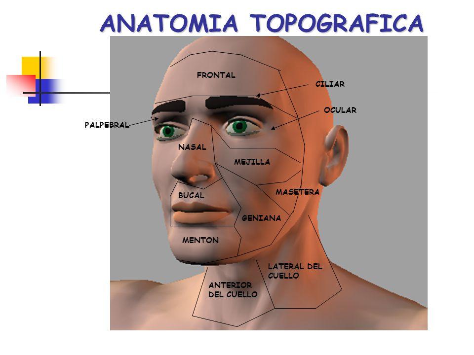 ANATOMIA TOPOGRAFICA FRONTAL CILIAR OCULAR PALPEBRAL NASAL MEJILLA