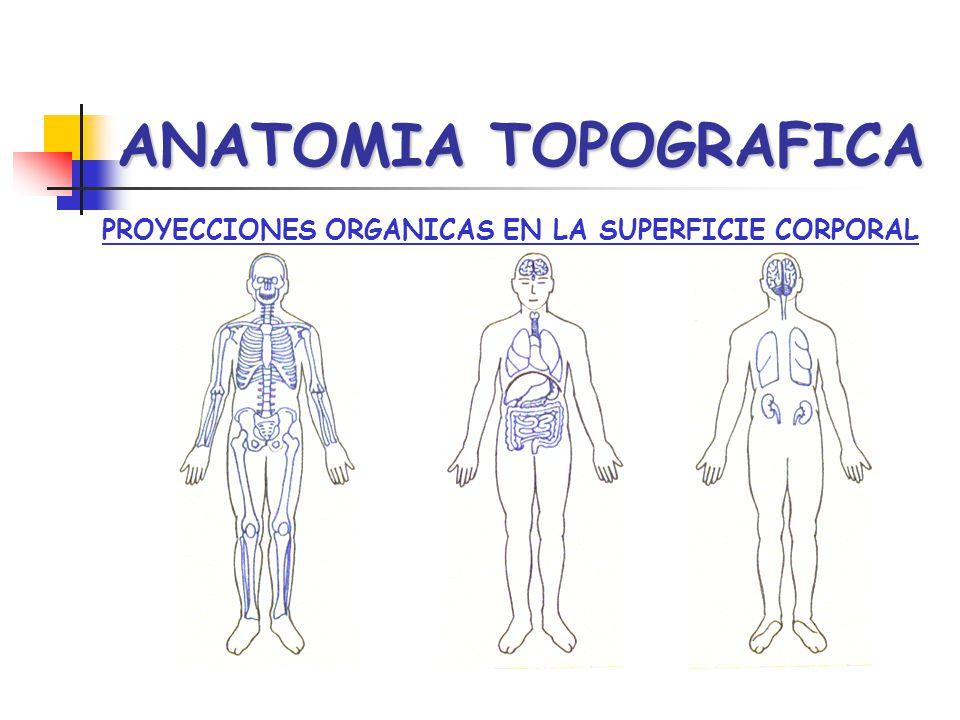 PROYECCIONES ORGANICAS EN LA SUPERFICIE CORPORAL