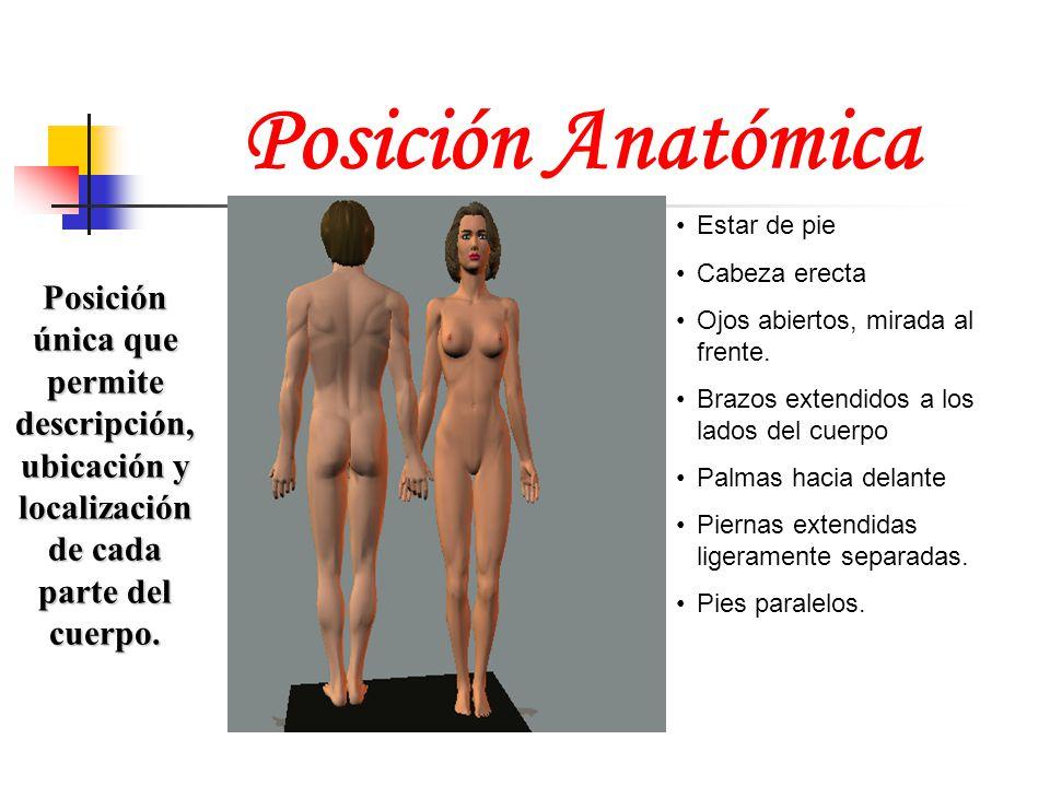 Posición Anatómica Estar de pie. Cabeza erecta. Ojos abiertos, mirada al frente. Brazos extendidos a los lados del cuerpo.