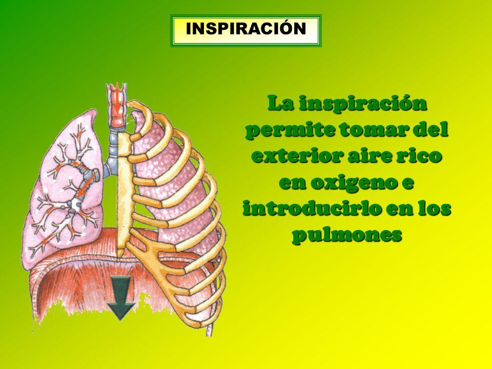 INSPIRACIÓN La inspiración permite tomar del exterior aire rico en oxigeno e introducirlo en los pulmones.