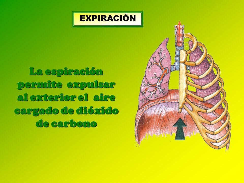 EXPIRACIÓN La espiración permite expulsar al exterior el aire cargado de dióxido de carbono