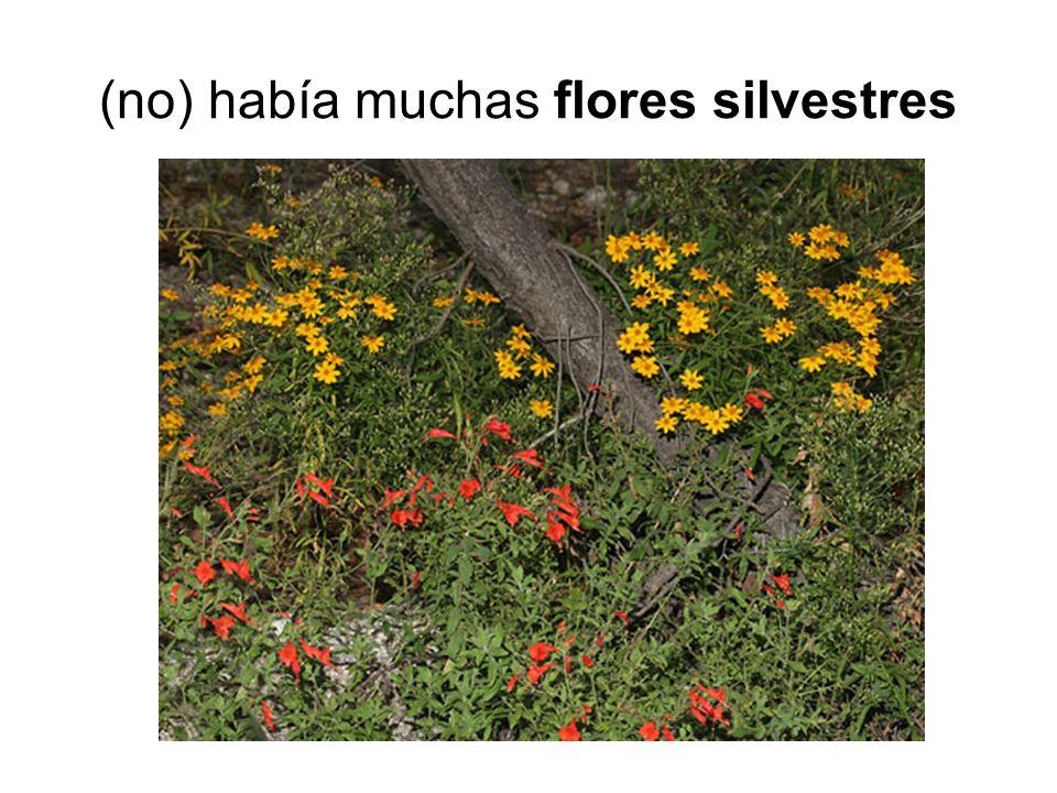 (no) había muchas flores silvestres