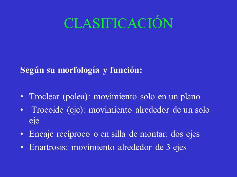 CLASIFICACIÓN Según su morfología y función: